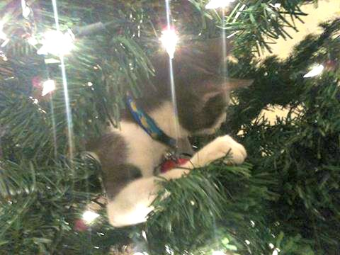 Belle in the Christmas tree