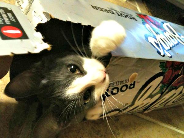 Belle in a root beer box