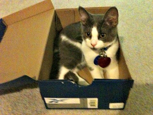 Belle in a shoe box