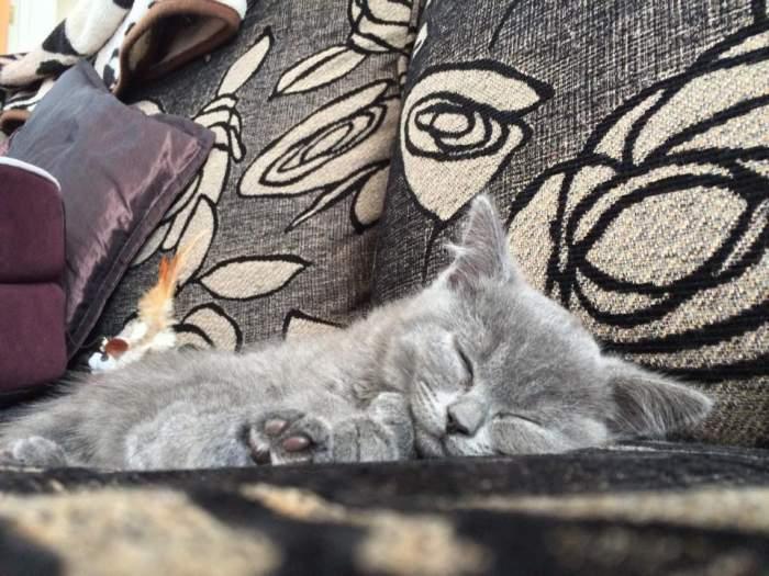 Bleu the kitten