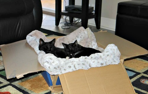 Bo and Indi in the comfy box