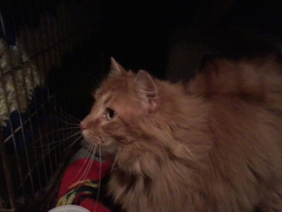 Boo Boo the feral cat