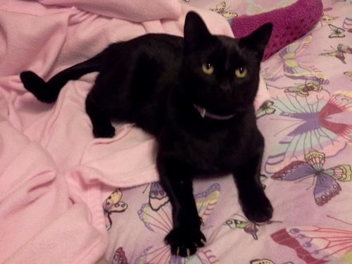 BubbaCat the black kitty