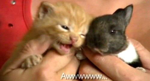 Bubbles the bunny and kitten friend