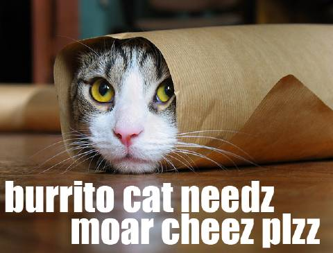 Tabby purrito needs moar cheez