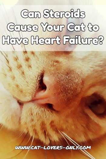 Can a steroid injection cause heart failure in cats