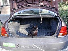 Cat in open trunk of car