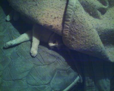 Sleep time kitty