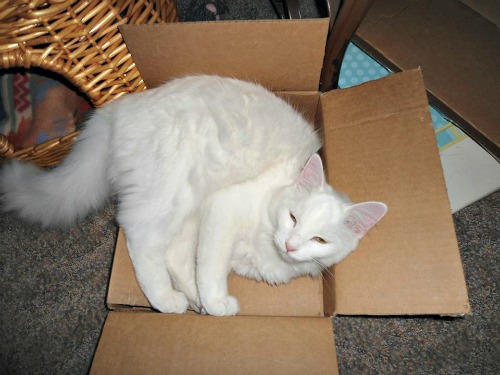 Chilly in a box