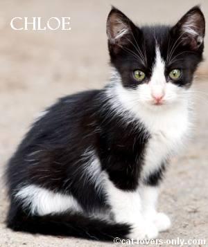 Chloe T. Kitteh