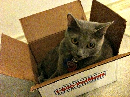 Cinder in the box