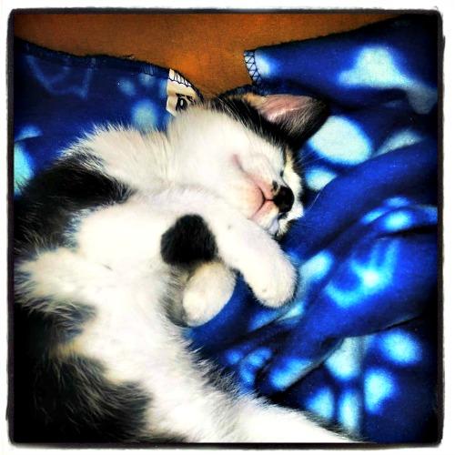 Dipsy the kitten