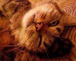 Featured Kitties August, 2014