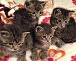 Featured Kitties March, 2015