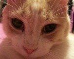 Featured kitties October 2013 thumb
