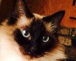Featured Kitties, September, 2014