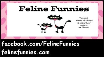 Feline Funnies