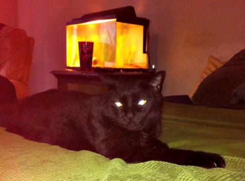 Fester the black cat
