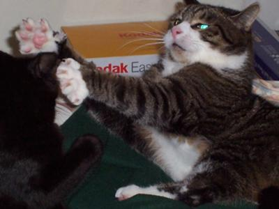 I'll fight you with one paw behind my back!