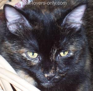 Frankie cat in basket