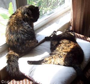 Frankie looms over Teddie