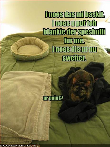 Cat sleeps on your sweater