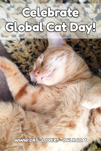 Celebrate Global Cat Day