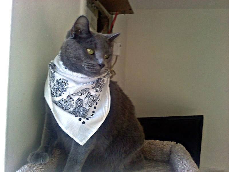 Halo with his stylish bandana