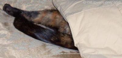 Teddie Loves to Sleep Under the Covers