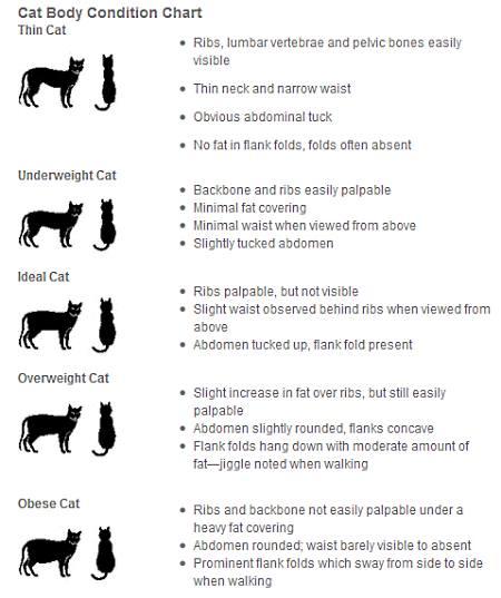 Iams cat weight chart