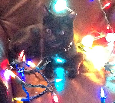 Jagger kitty in the Christmas spirit