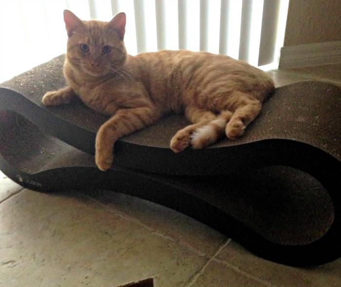 Jazzy the Rescue Cat on the PetFusion Ultimate Cat Scratcher Lounge