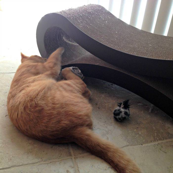 Jazzy playing with his toys and the PetFusion Ultimate Cat Scratcher Lounge