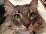 Featured Kitties July, 2013