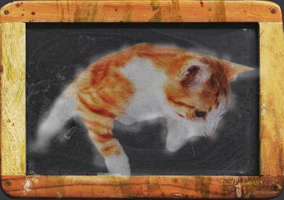 Blackboard Cat