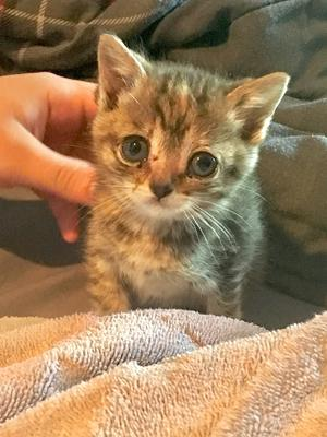 Any idea what kind of cat she is?