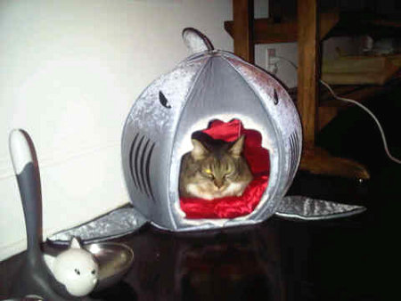 Katy Perry's cat Kitty Purry in her shark bed