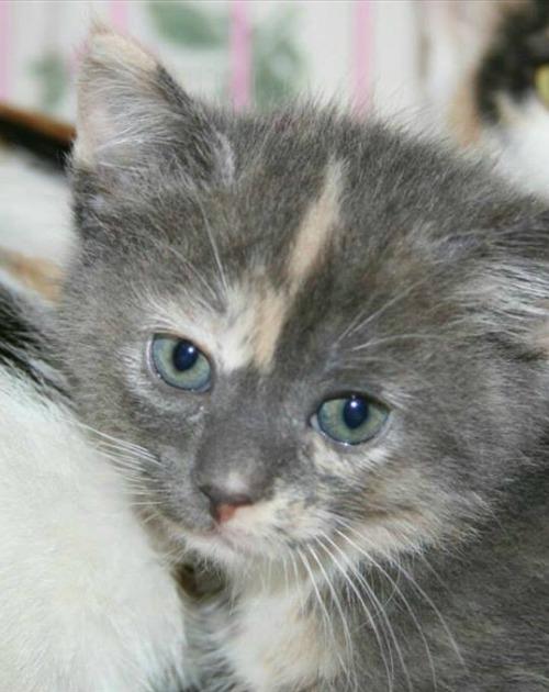 Layla the kitten