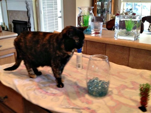 Lily Ann the fish bowl helper