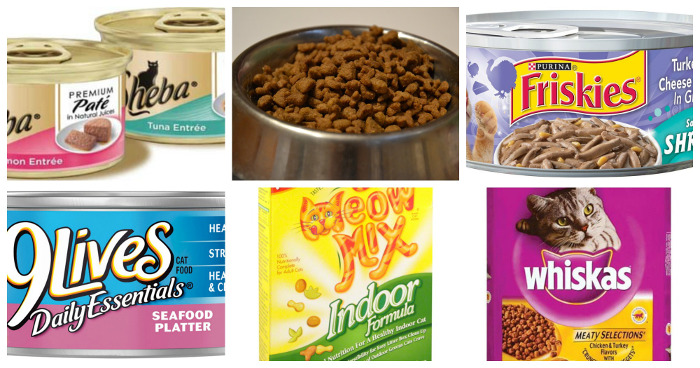 Which cat food is the best
