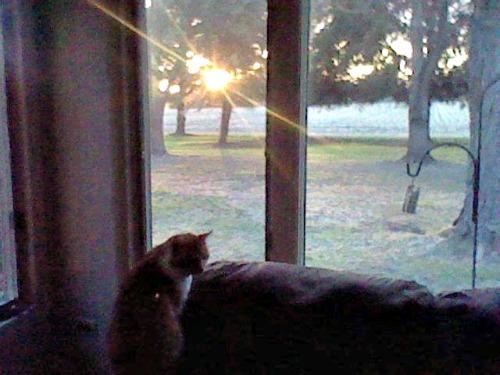 Lulu watching the sunrise