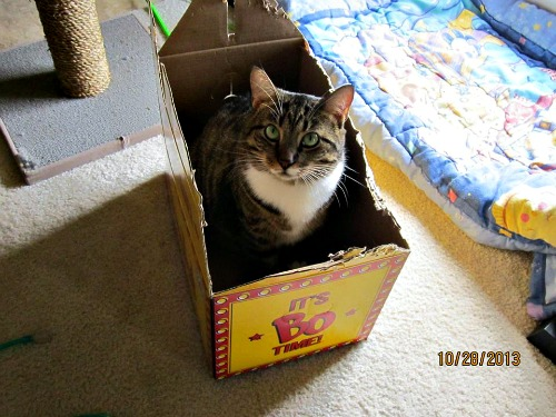 Malakai in the box