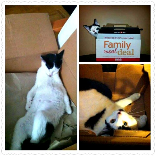 Max in boxes