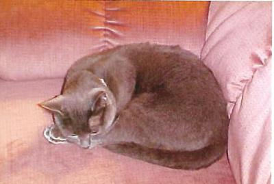 Miss Kitty sleeping in her favorite place--my husband's big recliner.