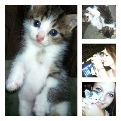 Mrvica the tabby and white kitten collage
