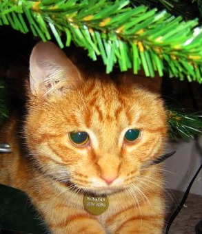 Wonkas' first Christmas