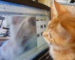 Orange kitten stalks himself
