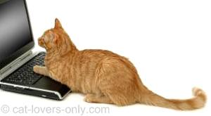 Orange tabby cat using laptop