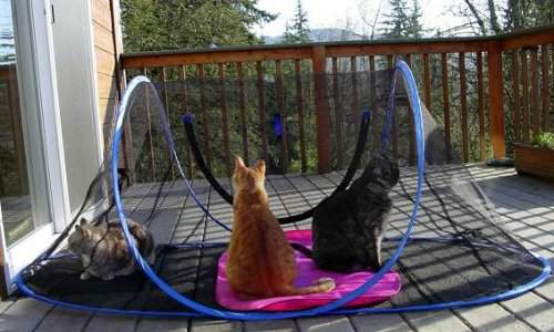 Portable Outdoor Dog Enclosures : Outdoor cat enclosures outside protected play and rest