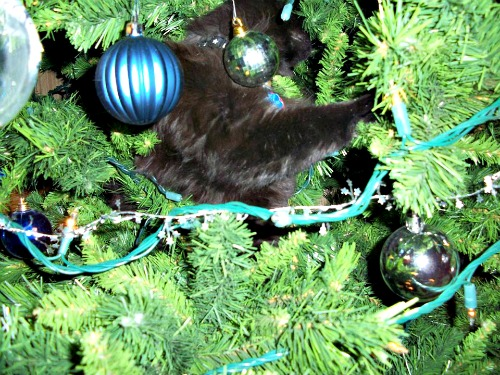 Ozzy in the Christmas tree